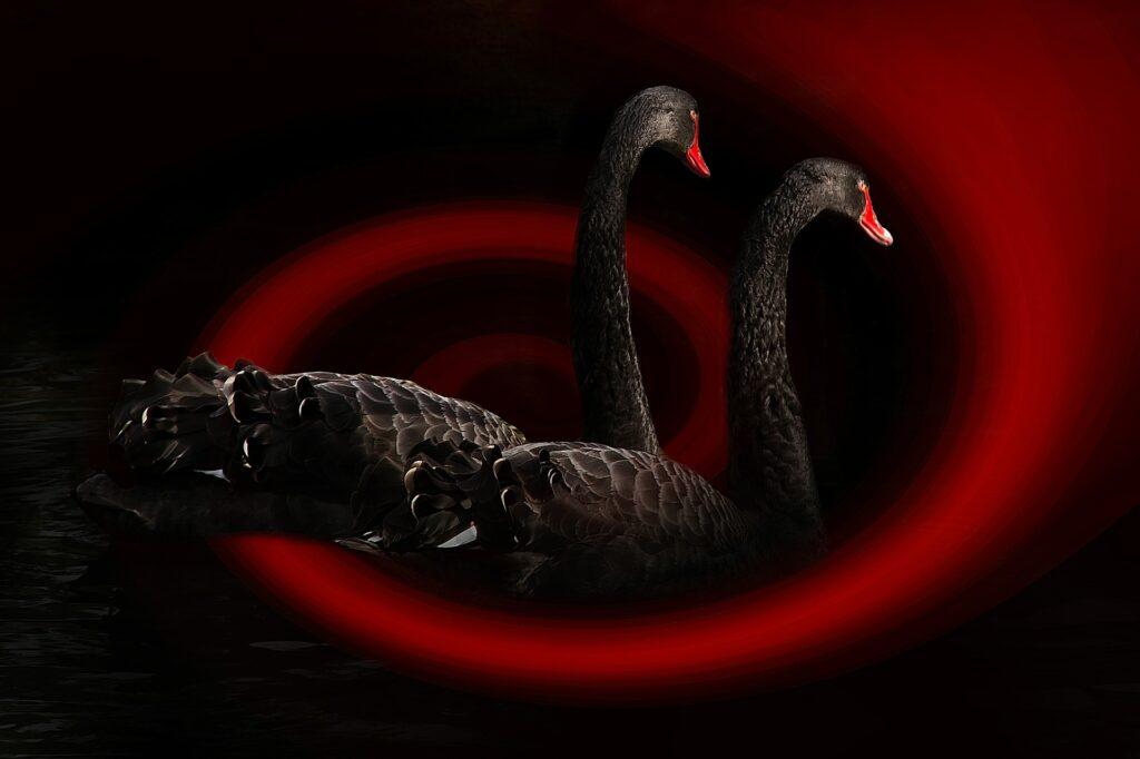 01_blackSwan